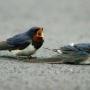 Death of a Bird